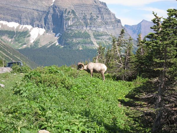 Canadian Rockies - Dave Denham's Photos